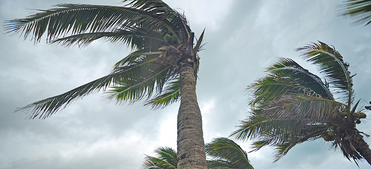 Wind Restoration Florida | Florida State Restoration
